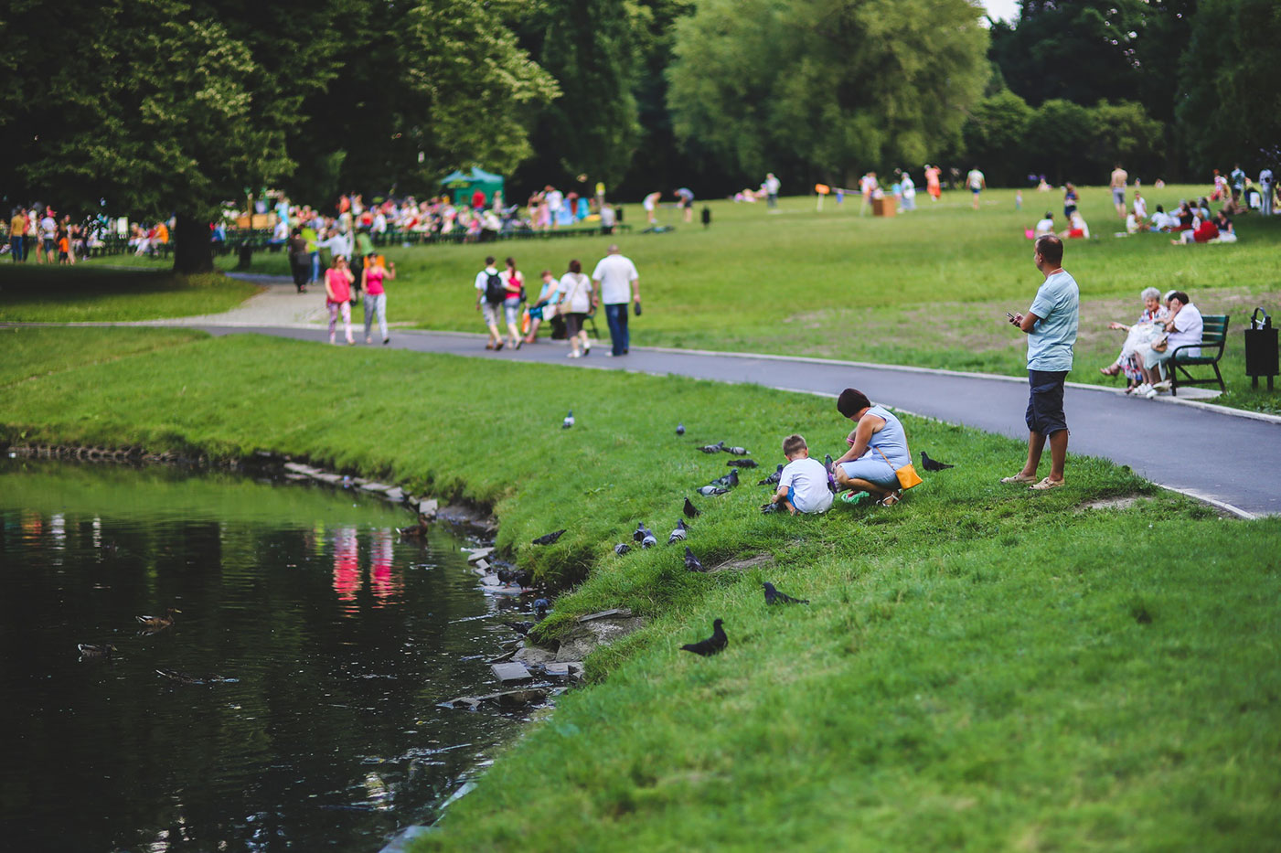 people feeding ducks at the park